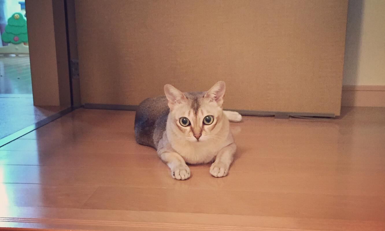うちの猫トノさん